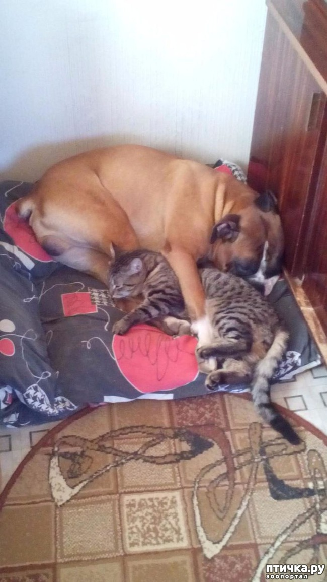 фото 2: Кто сказал, что кошка с собакой не дружат?)