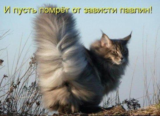 фото 6: Котоматрица (котоюмор!)!