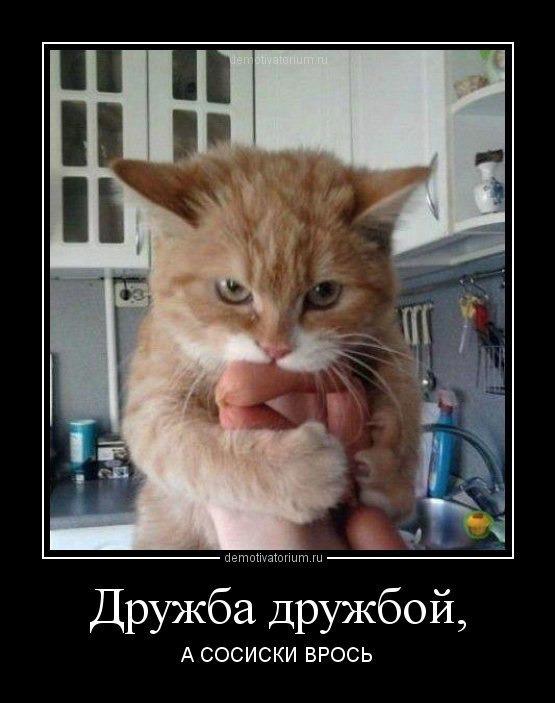 фото 7: Котоматрица (котоюмор!)!