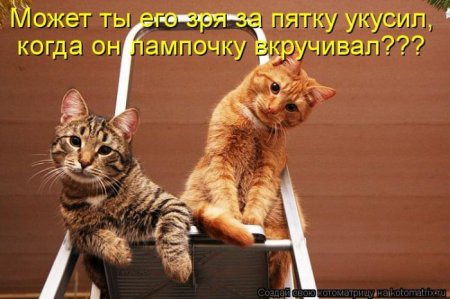 фото 8: Котоматрица (котоюмор!)!