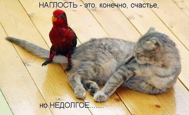 фото 9: Котоматрица (котоюмор!)!