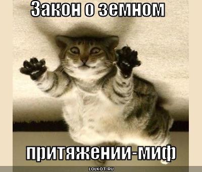 фото 10: Котоматрица (котоюмор!)!