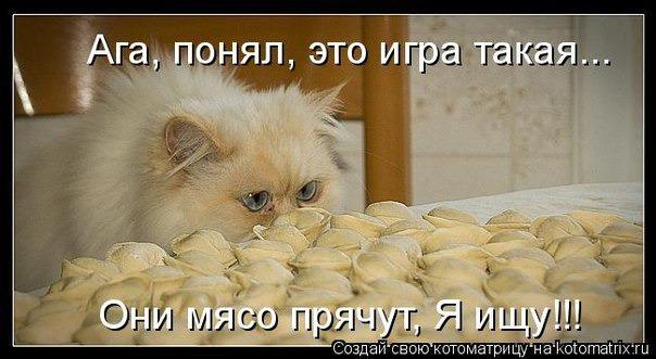 фото 11: Котоматрица (котоюмор!)!