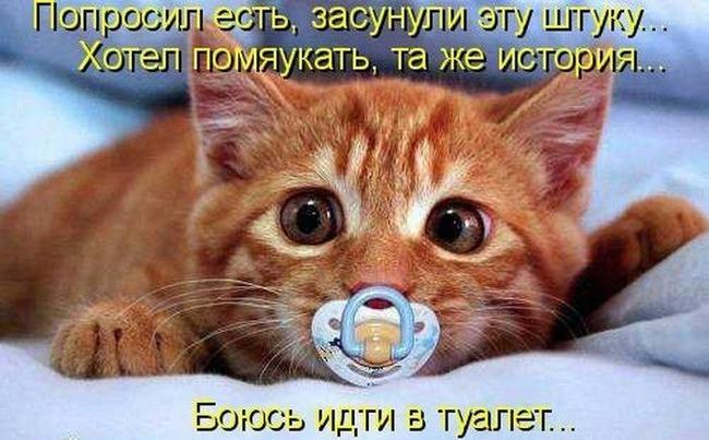 фото 12: Котоматрица (котоюмор!)!