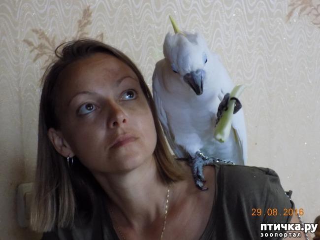 фото 6: Наш домашний питомец по кличке Котя - любимый попугай какаду