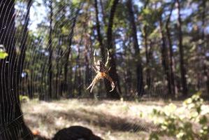 фото: Стихи о пауках
