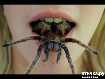 фото: Как мало тех, кто любит пауков и как же я их понимаю.