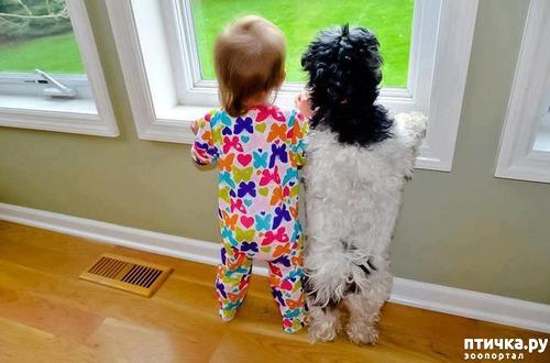 фото 2: Дети и собаки (фотки)