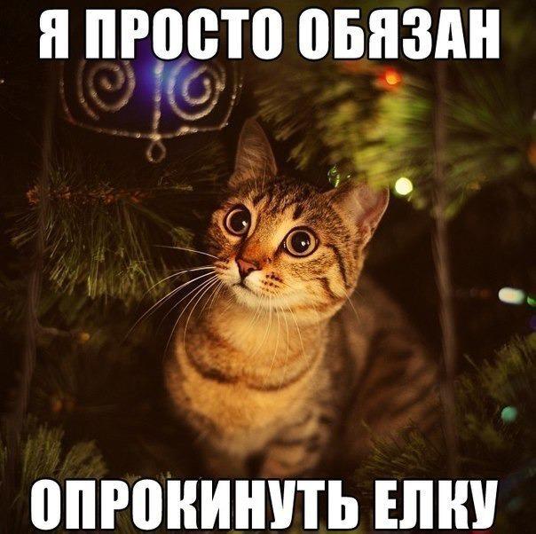 "фото 2: Котоматрица ""Кот и Новый год""!"
