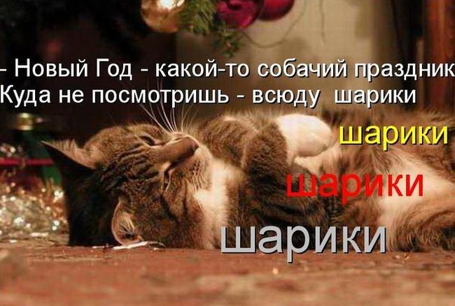 "фото 6: Котоматрица ""Кот и Новый год""!"