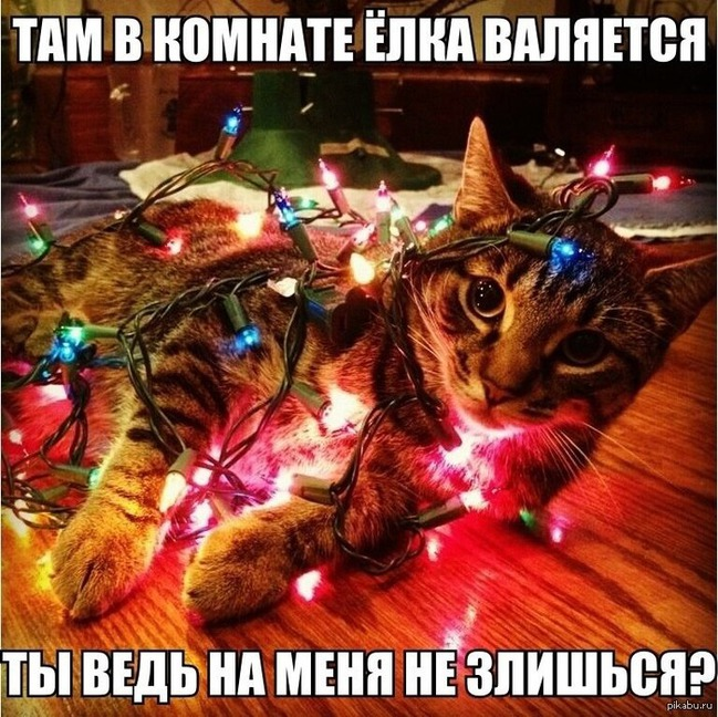 "фото 8: Котоматрица ""Кот и Новый год""!"