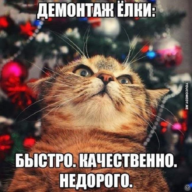 "фото 9: Котоматрица ""Кот и Новый год""!"