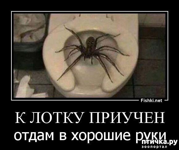фото 1: Как мало тех, кто любит пауков и как же я их понимаю.