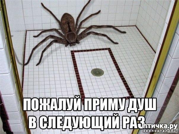 фото 2: Как мало тех, кто любит пауков и как же я их понимаю.