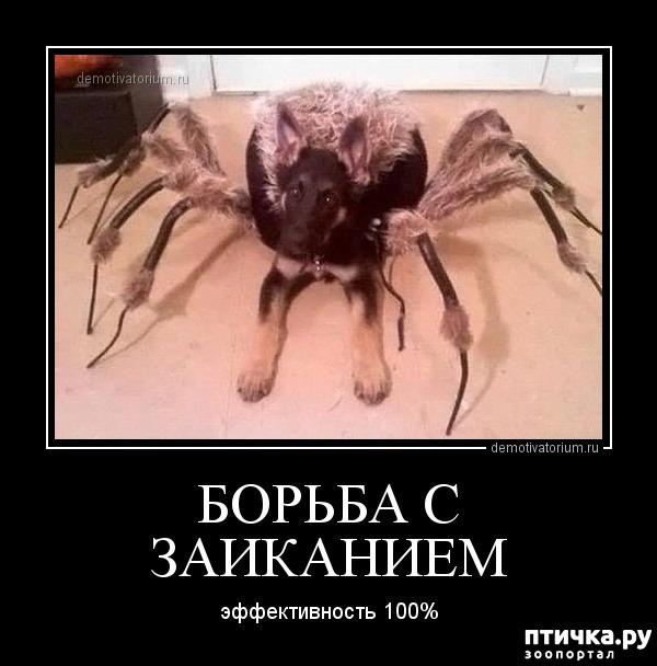 фото 4: Как мало тех, кто любит пауков и как же я их понимаю.