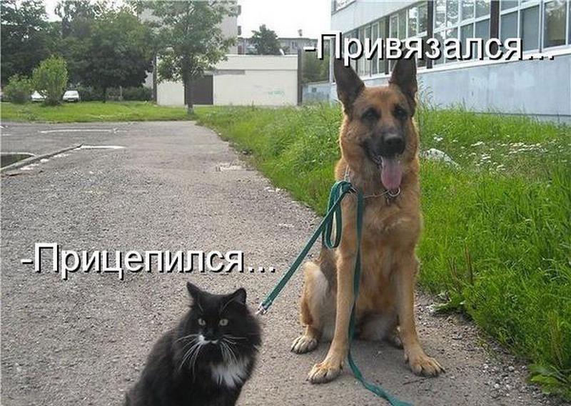 Прикольные картинки про кошек и собак с надписями смешные до слез, анимашки шампанское
