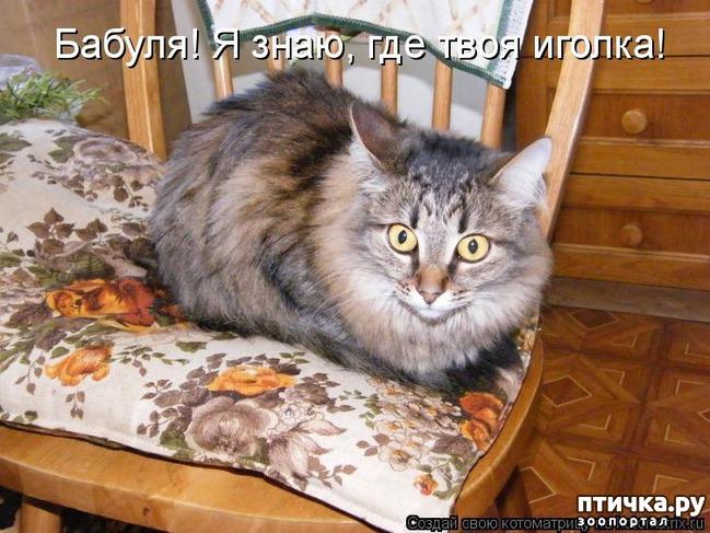 фото 3: Забавные фото кошек (котоматрица)