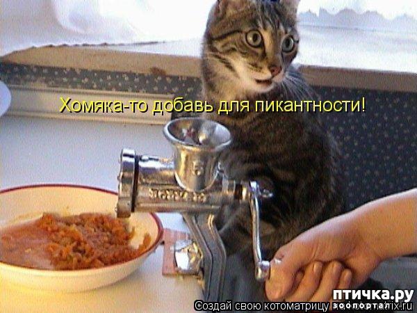 фото 4: Забавные фото кошек (котоматрица)