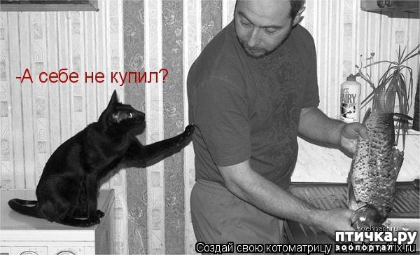 фото 5: Забавные фото кошек (котоматрица)