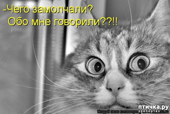фото 6: Забавные фото кошек (котоматрица)