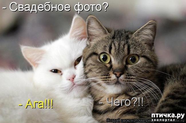 фото 7: Забавные фото кошек (котоматрица)