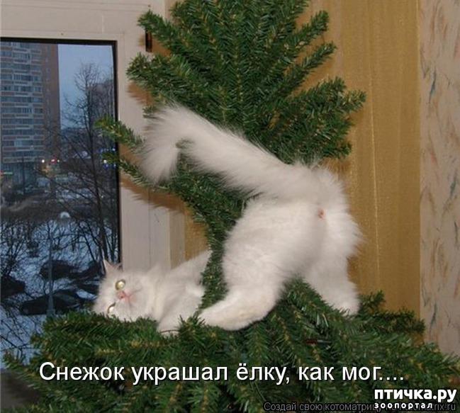 фото 8: Забавные фото кошек (котоматрица)