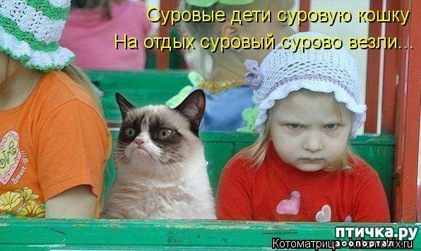 фото 9: Забавные фото кошек (котоматрица)