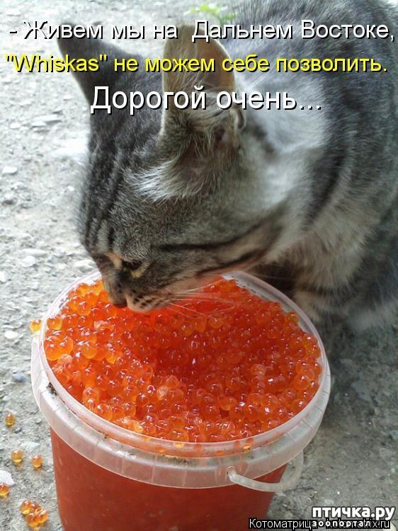 фото 10: Забавные фото кошек (котоматрица)