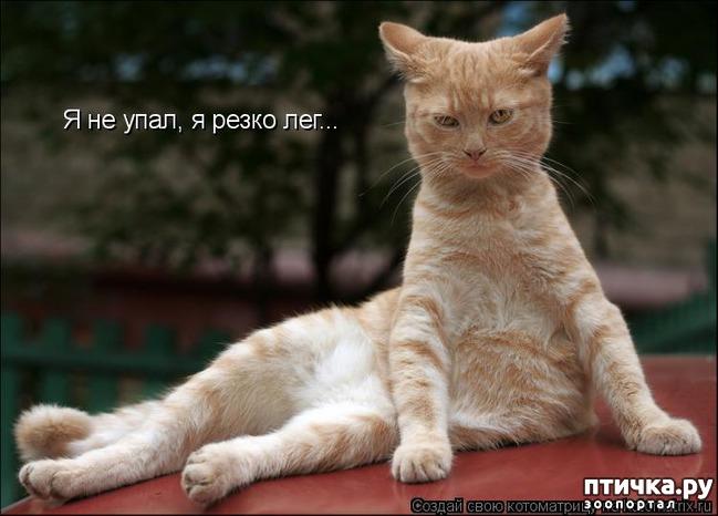 фото 11: Забавные фото кошек (котоматрица)