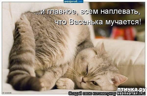 фото 12: Забавные фото кошек (котоматрица)