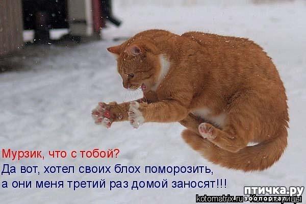 фото 13: Забавные фото кошек (котоматрица)