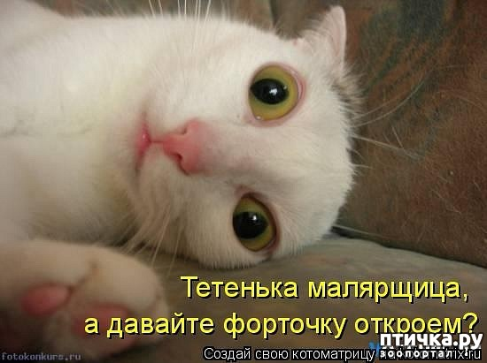 фото 14: Забавные фото кошек (котоматрица)