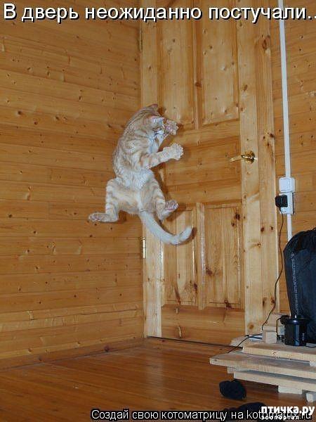 фото 16: Забавные фото кошек (котоматрица)