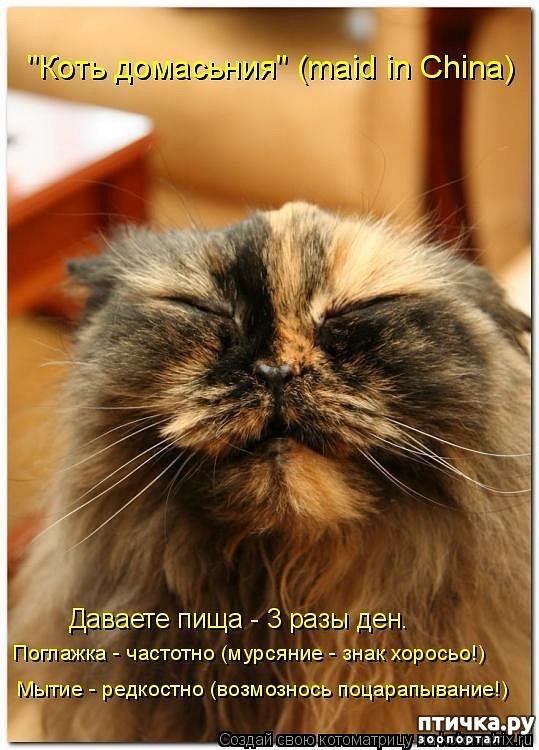 фото 18: Забавные фото кошек (котоматрица)