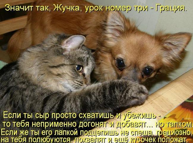 фото 1: Кото-собако-матрица: Как кошка с собакой! Часть 2.