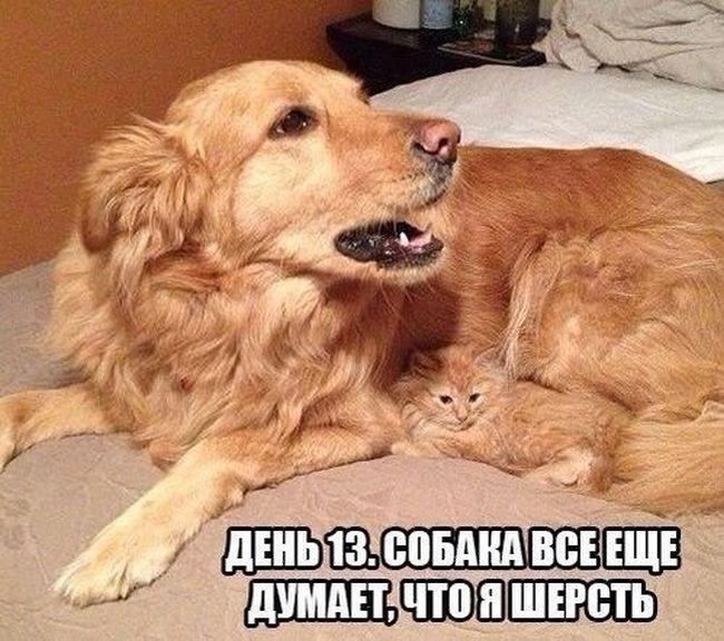 фото 2: Кото-собако-матрица: Как кошка с собакой! Часть 2.