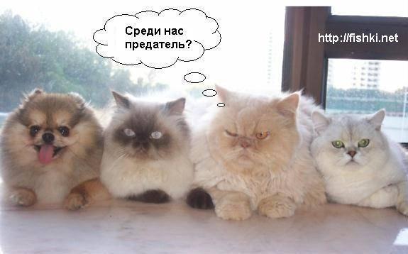 фото 3: Кото-собако-матрица: Как кошка с собакой! Часть 2.