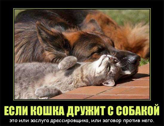 фото 4: Кото-собако-матрица: Как кошка с собакой! Часть 2.