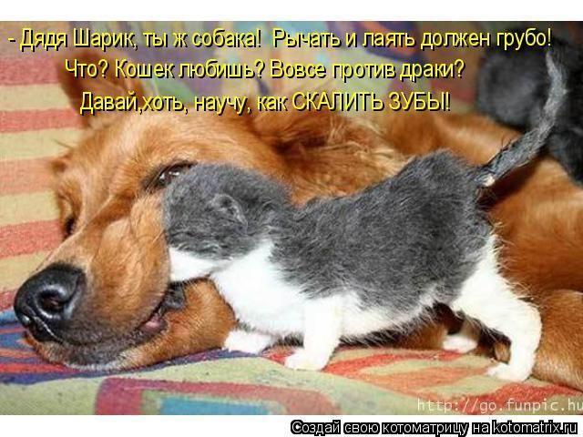 фото 6: Кото-собако-матрица: Как кошка с собакой! Часть 2.