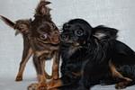 фото: Любовь к животным