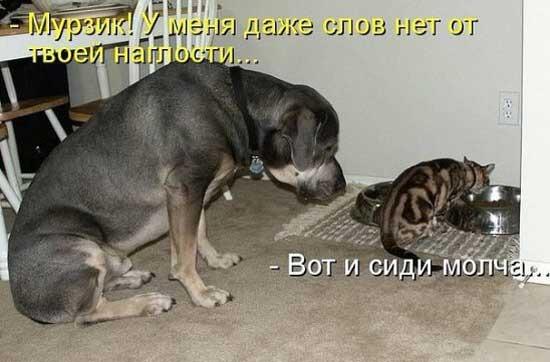фото 8: Кото-собако-матрица: Как кошка с собакой! Часть 2.