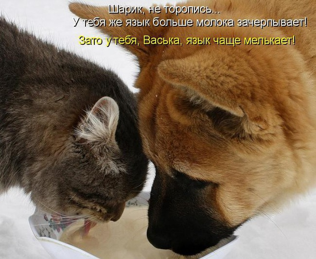 фото 9: Кото-собако-матрица: Как кошка с собакой! Часть 2.