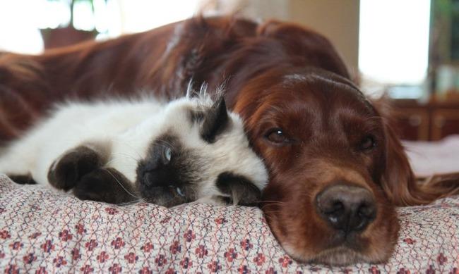фото 10: Кото-собако-матрица: Как кошка с собакой! Часть 2.