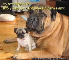 фото 11: Кото-собако-матрица: Как кошка с собакой! Часть 2.