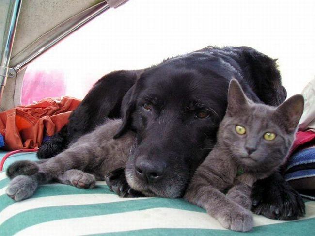 фото 12: Кото-собако-матрица: Как кошка с собакой! Часть 2.