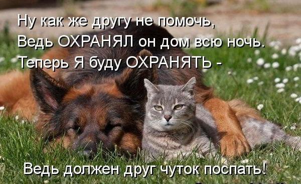 фото 13: Кото-собако-матрица: Как кошка с собакой! Часть 2.