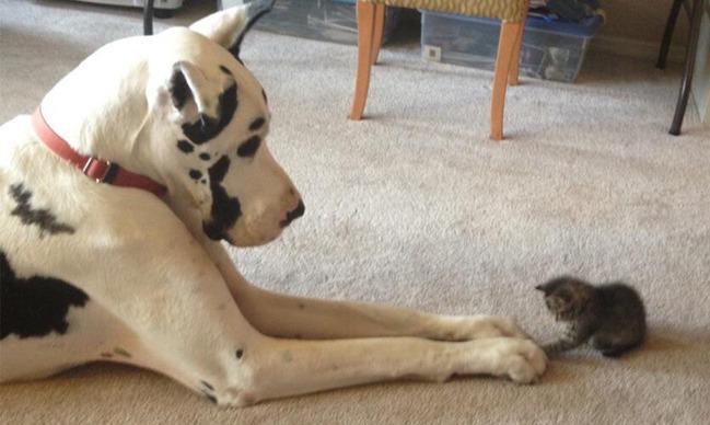 фото 15: Кото-собако-матрица: Как кошка с собакой! Часть 2.