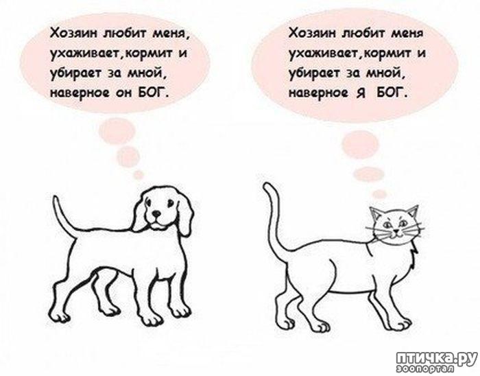 Отличия кошки от собаки в картинках