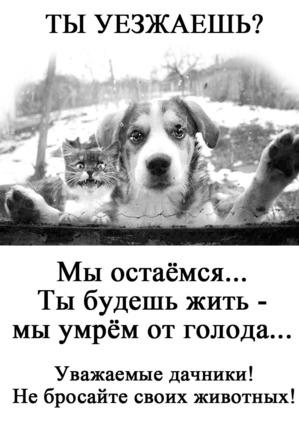 фото: Не бросайте животных!!!