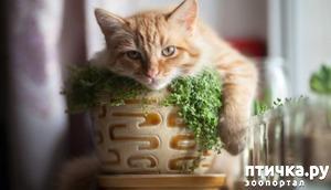 фото: Котоматрица: Кошки и домашние растения!